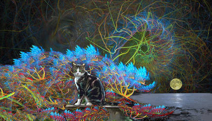 Where cats go 1 by taisteng