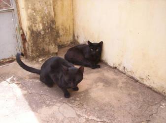 my cats by xolao