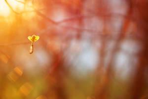 The little things matter by photofisken
