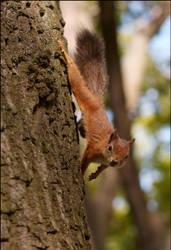 Squirrel by eRiver