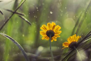 Daisy by Grishnakh666