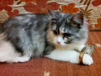 my cat by starlaa1