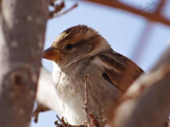 bird by starlaa1