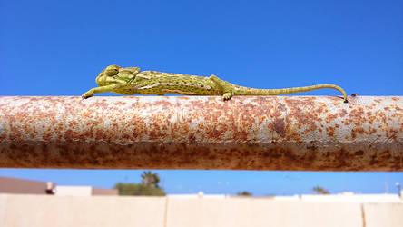 chameleon by starlaa1