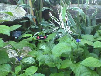 Vita Cam: Butterfly by Silver-Ninja
