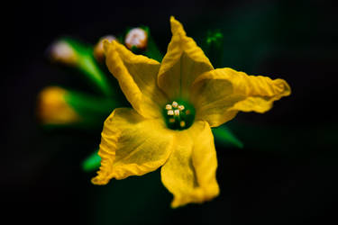 Bright Light Yellow Flower by HCKPhotography