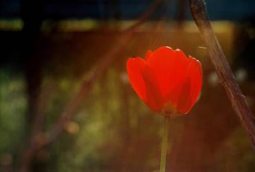 Sun makes me red by Vet-al