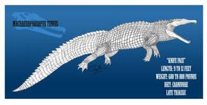 Machaeroprosopus tenuis by BlueCea