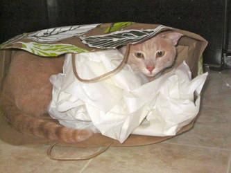 Cat in the Bag by samtuya