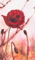 poppy by Yoshie8