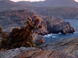 It Grows in Rocks by Alimba