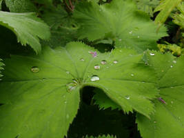 Droplet's on green by Alimba