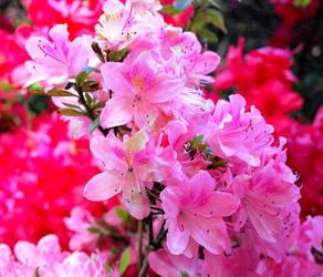 Pink Flower branch by GigitjeR