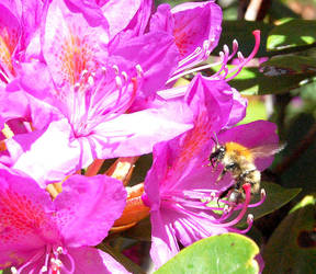 Busy bee at work by GigitjeR