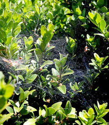 Spider web by GigitjeR