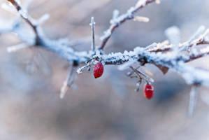 Winter Day by Ardisrawr