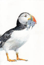 Puffin by Giuko