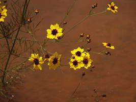 yellow by sunbeamfireking