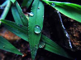 rain drops by sunbeamfireking