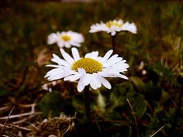 Spring by Krzyho