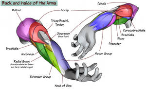 Back and Inside Arm Chart by NemoNova
