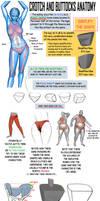 Crotch and Buttocks Anatomy by NemoNova