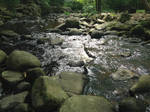 Stream 2 by Proncus