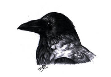 crow by A-Loss