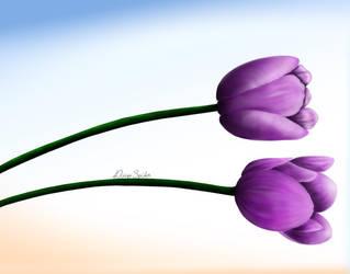 Violet Tulip by diegospider
