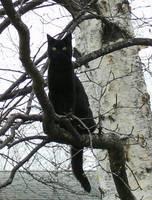 Black Cat Spooky Tree by SinfulNeko-eh