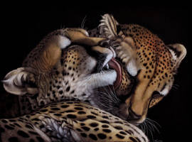 Cheetah Snuggle by Heatherzart