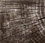 Wood Texture #1 by Matt-Campbell