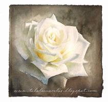 White rose by dodoalbino
