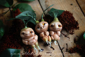Mandrake roots by dodoalbino