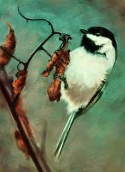 Chickadee by melaniey