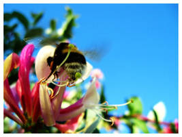 Bee Honey by SisterOfNight87