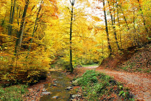 Autumn Rush II by SisterOfNight87