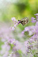 Butterfly dream by IrenaDem