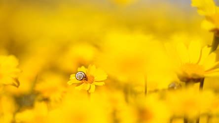 Yellow by IrenaDem