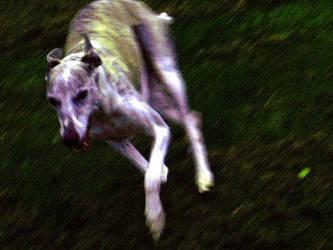 Run by ebony-angel