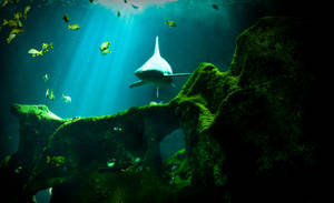 Aquarium La Rochelle 4 by NickyLarson