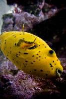Aquarium La Rochelle 5 by NickyLarson