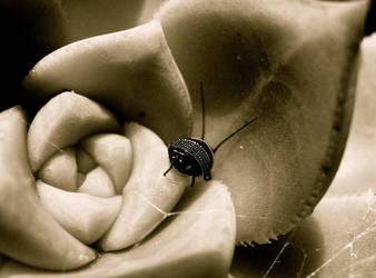 bug by federer007