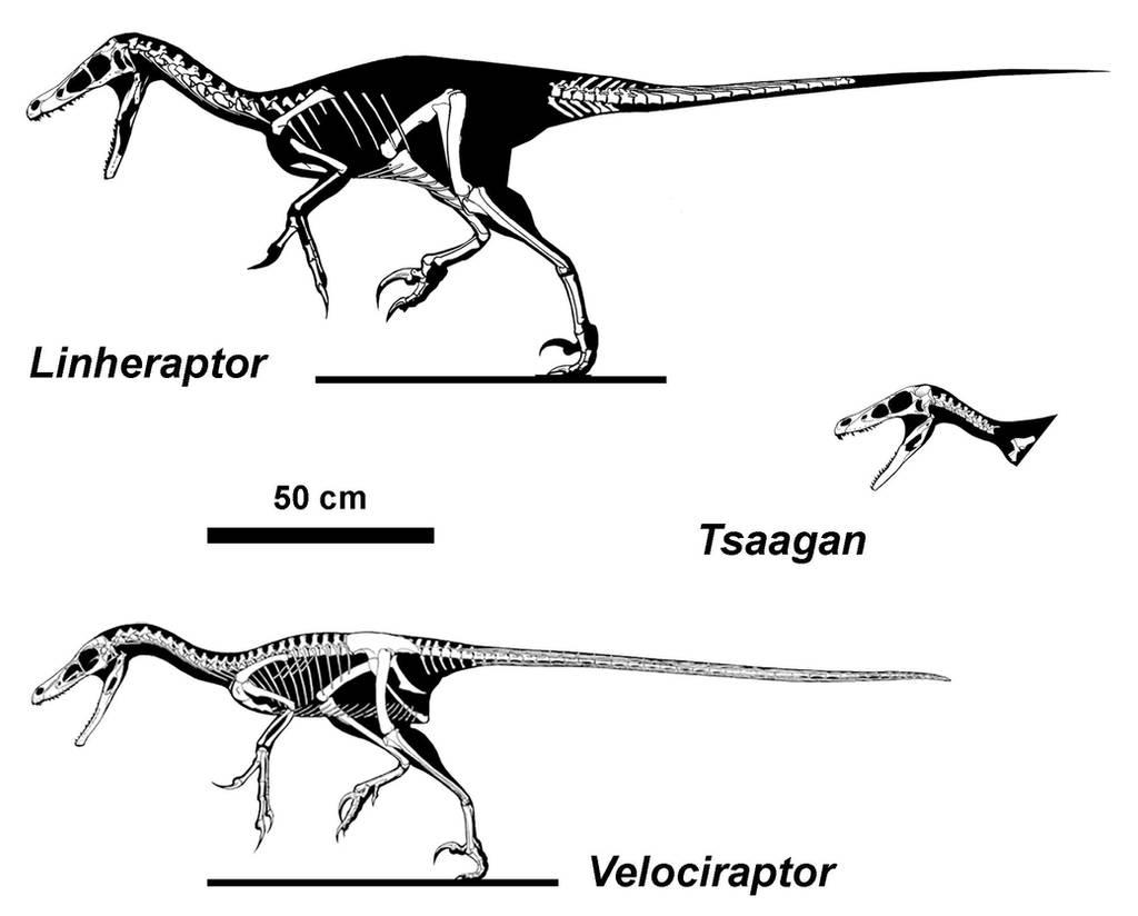 Raptors of the Dunes by Qilong