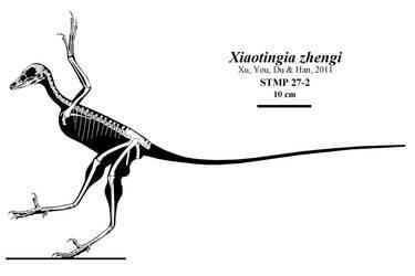 Xiaotingia by Qilong
