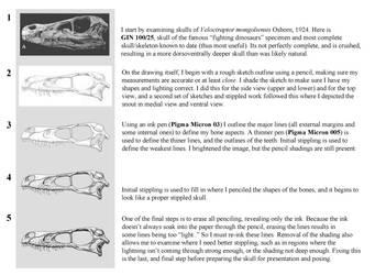 Stippling Skull Guide by Qilong