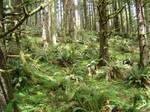 Ecola State Park, Oregon by Qilong
