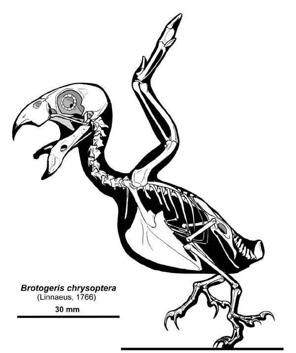 Birdy Bones by Qilong