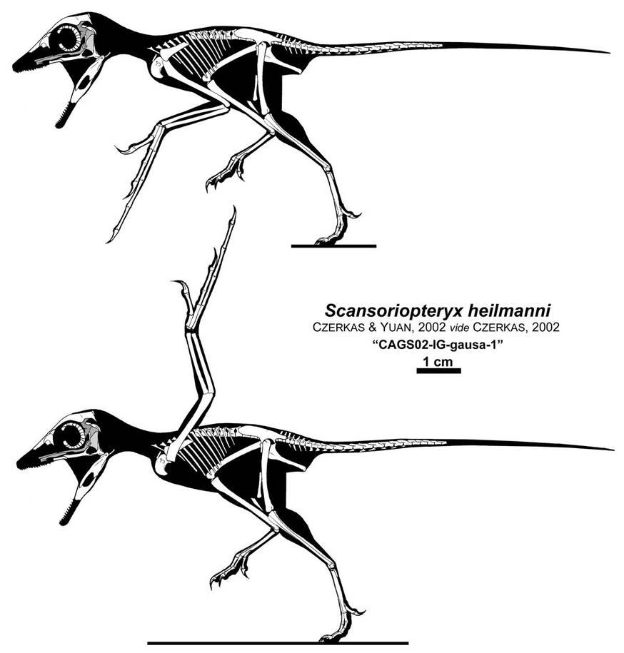 The Aye-aye Dinosaur by Qilong