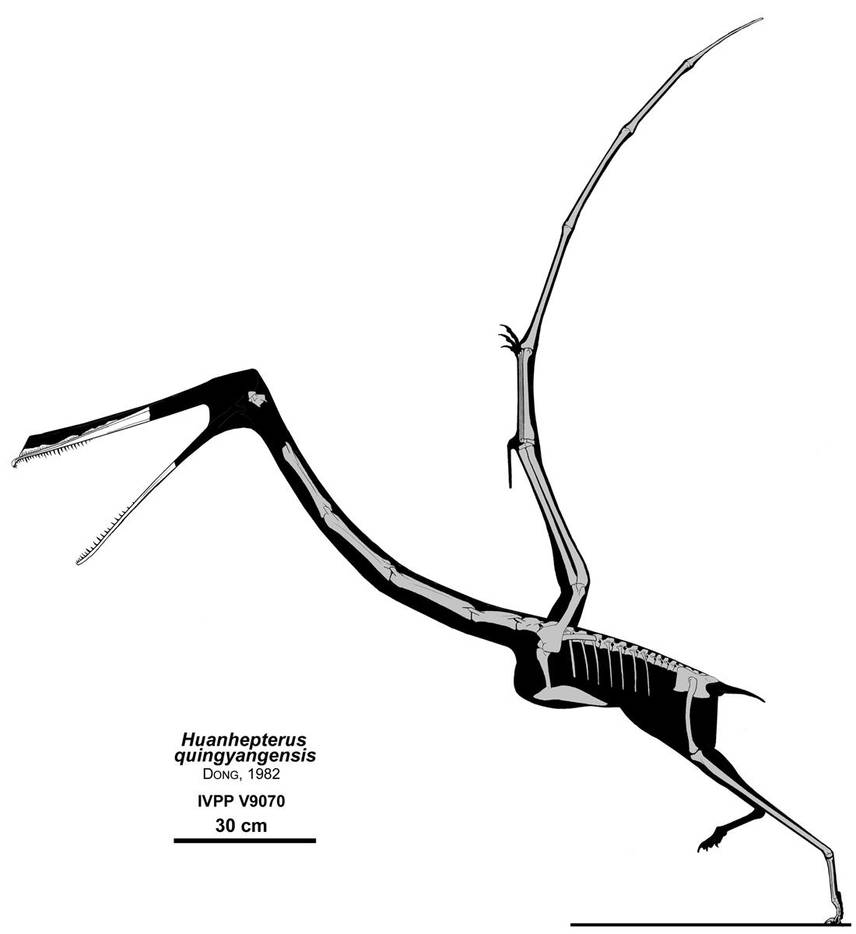 The Stork Pterosaur by Qilong